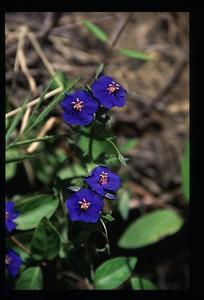 14 blue flowers 114