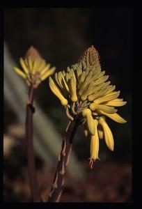 15 yellow flowers 102