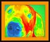 Jill Duncan_dog in orange