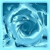 Jill Duncan_Blue Liquid Rose_Digital Photo_12x12