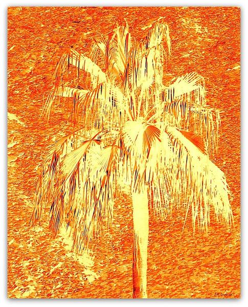 Jill Duncan_burnt orange palm