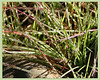 Jill-Duncan_morning-grass_16x20