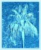 Jill Duncan_Blue Palm