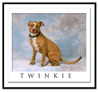 3871 twinkie framed
