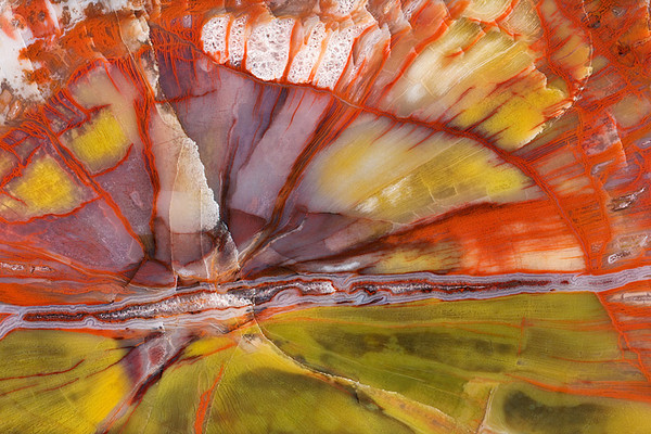 #275 Petrified Wood Close-up