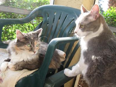 Tiba and Teo, West Palm Beach, Fla.