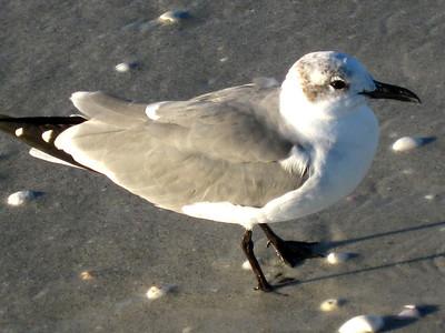 Sanibel Island, November 2008.