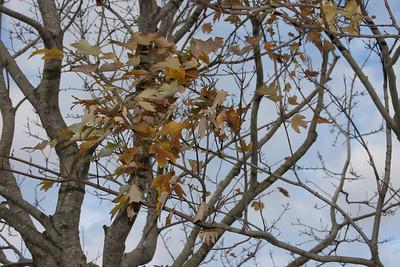 """""""Winter"""" in Pembroke Pines, Fla. December 2010."""