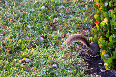 Squirrel, evening, Nov. 28, 2012.