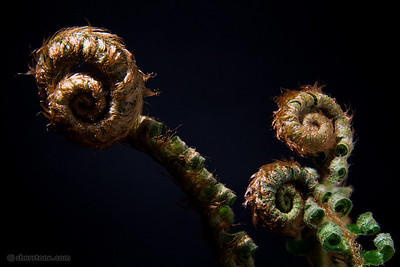 knotted_2010