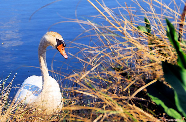 This photo was entered in the Fred Miranda Weekly contest for the theme 'Edges'   It was titled 'Lake Edge Home'