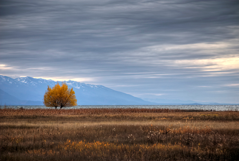 Autumn Tree at Flathead Lake - Montana