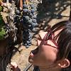 Masha likes grapes.  Umpqua Valley Oregon
