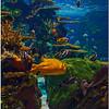 Jan 29<br /> Ripley's Aquarium, Myrtle Beach SC