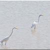 Sept 27<br /> A beautiful day at Jordan Lake<br /> Storks x2