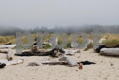 Beach-Driftwood-10