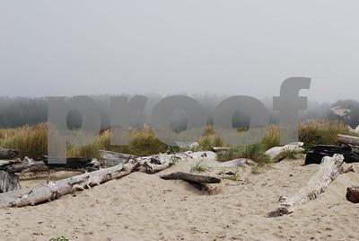 Beach-Driftwood-8