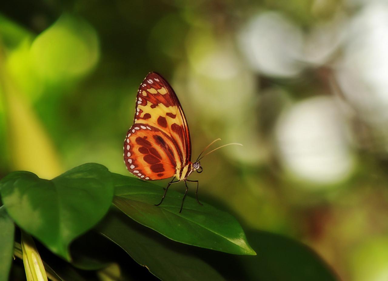 Orange butterfly IMG_8222