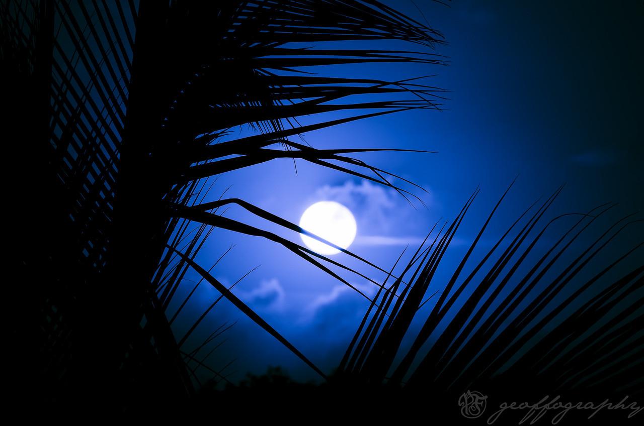 Blue Hawaii: Tropical paradise
