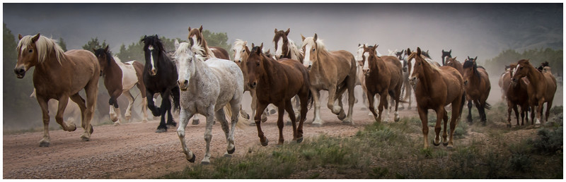 Great American Horse Round Up
