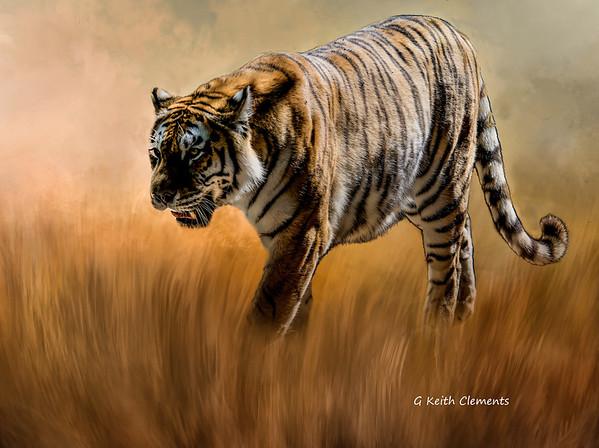 Bengel Tiger