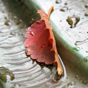 Leaf on  Lucy Stone's Skirt, Boston MA