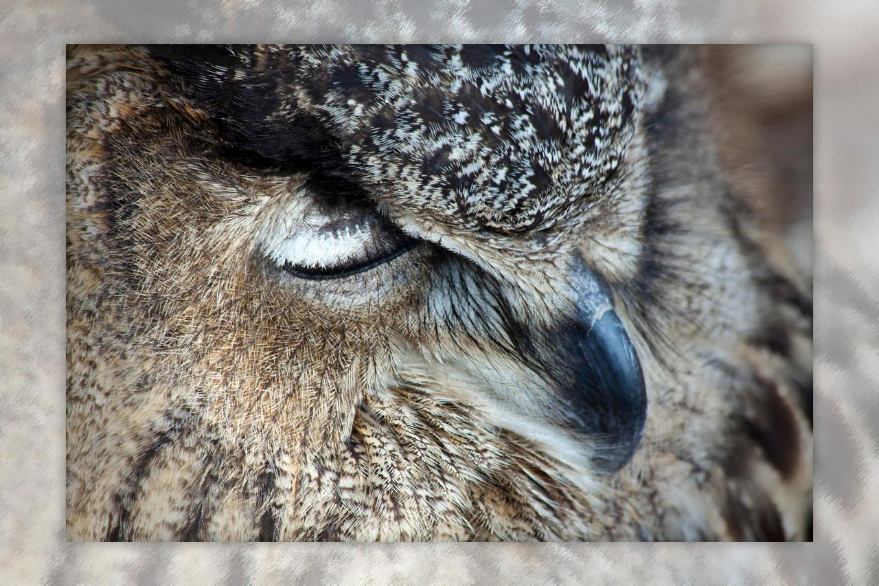 owl_IMG_0591
