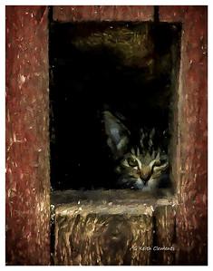 Swedish Barn Kitten