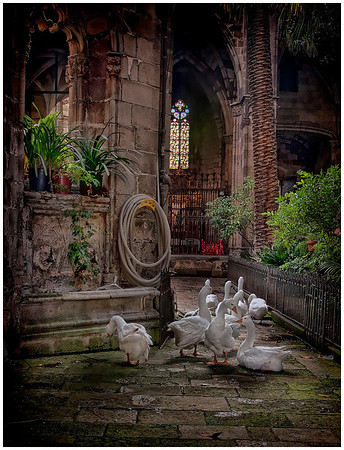 Barcelona Cathedrtal Geese