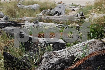 Beach-Driftwood-1