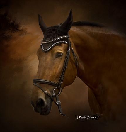 Xenon The Show Horse