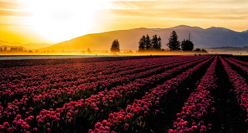 Skagit Valley Sunrise