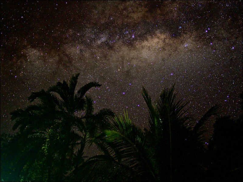 Palms under the milky way