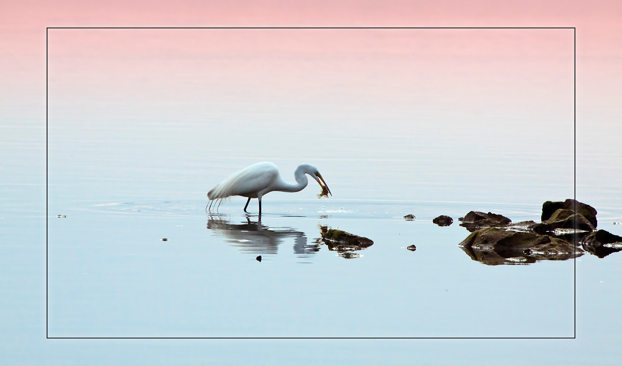 white egret at suinset_IMG_3142