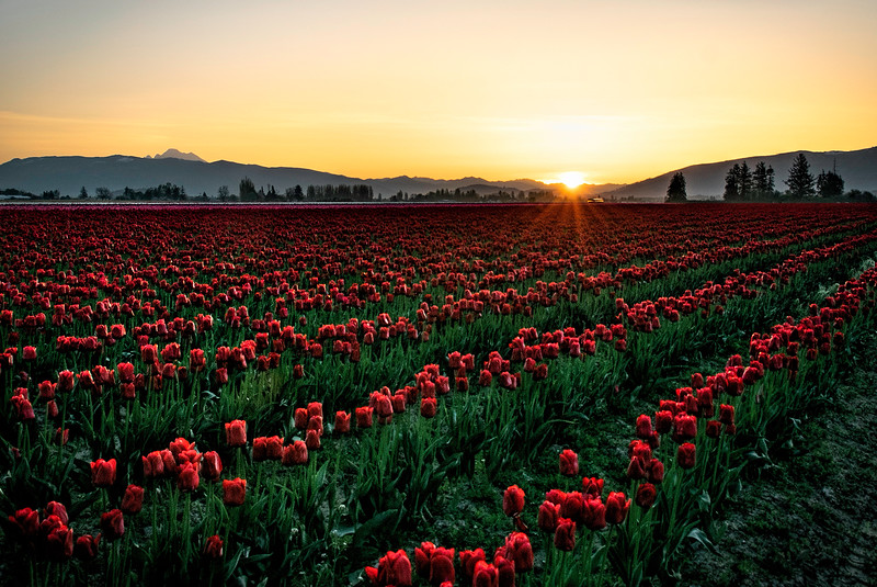 Sunrise in Skagit Valley