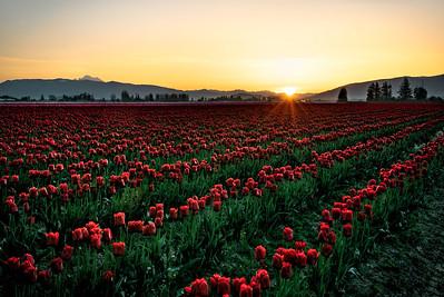 Sunrise in Skagit Valley