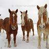 Joy's Horses.... so beautiful!