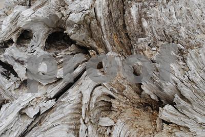 Beach-Driftwood-4