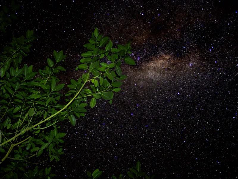 Ways of Milk and Stars and Trees
