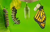 8556_091112_100628_5DM3L-composite-butterfly-finished-20x10