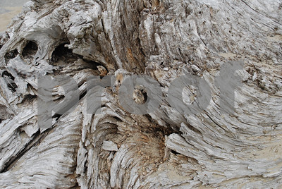 Beach-Driftwood-5