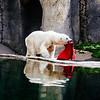 Polar bear at the Oregon State Zoo