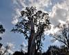 Tree/18-200vr