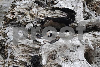 Beach-Driftwood-6