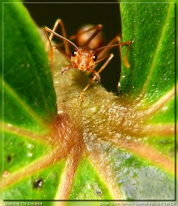 red ant019_filtered
