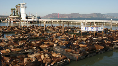 Sea Lions at Pier 39, San Francisco, October 2009