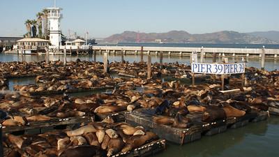 Sea Lions at Pier 39, San Francisco, October 2009