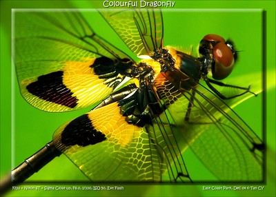 colourful dragonfly-26_filtered