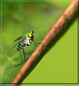 long leg fly-34_filtered-border