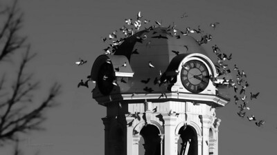 """Photo a Day for a Year"": Saturday November 20, 2:31pm  ...a flock of birds temporarily leave the clock tower above City Hall (also notice the city's time is a little behind)."